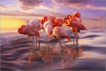 Gallery Print  Flamingo Siesta - Adrian Borda