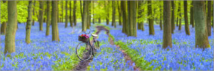 Premium-Poster  Bluebell Forest Spaziergang - Assaf Frank