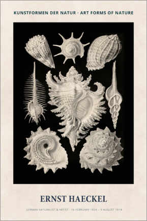Leinwandbild  Ernst Haeckel - Art forms of nature II - Museum Art Edition