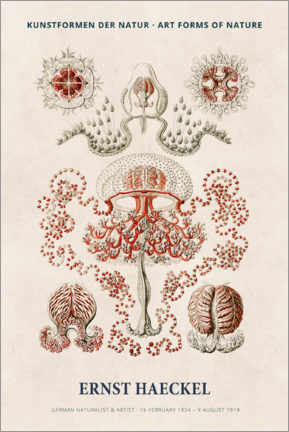 Hartschaumbild  Ernst Haeckel - Art forms of nature I - Museum Art Edition