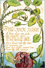 Wandsticker  Die kranke Rose - William Blake