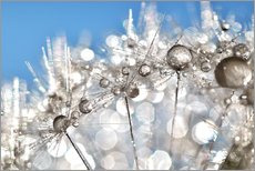 Wandsticker  Pusteblume White and Blue - Julia Delgado