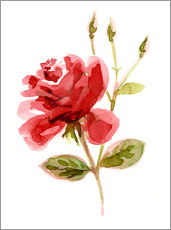 Wandsticker Rote Rose