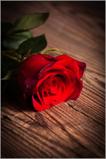 Gallery Print  Rote Rose auf Holz