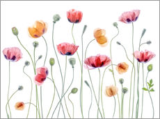 Mandy Disher - Papaver Partei