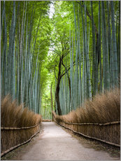 Gallery Print  Bambus Wald in Kyoto Sagano Arashiyama, Japan - Jan Christopher Becke