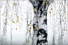 Wandsticker  Birch Tree 1 - Mareike Böhmer