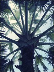 Gallery Print  Tropical Tranquillity - Angelo Cerantola