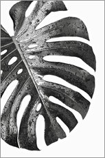 Acrylglas  Schwarze Monstera 01 - Art Couture