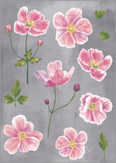 Nic Squirrell - Japanese Anemones