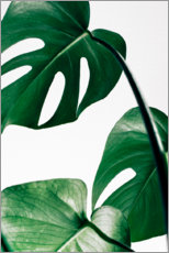 Gallery Print  Monstera - Art Couture