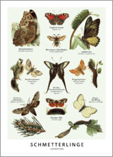 Premium-Poster  Schmetterlinge - Wunderkammer Collection