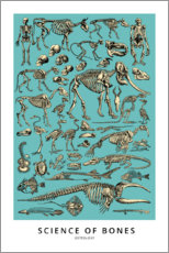 Premium-Poster  Osteologie - Wunderkammer Collection