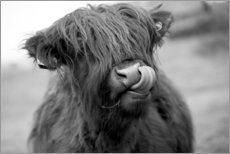 Gallery Print  Highland Cattle Schwarz-Weiß - John Short