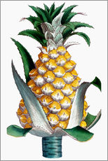 Wandsticker  Pineapple, 1789.
