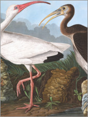 Wandsticker  Reiher - John James Audubon