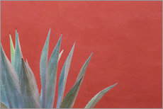 Gallery Print  Agave vor roter Wand - Don Paulson