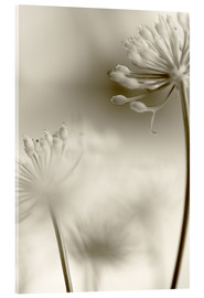 Acrylglas  Softly - Evelyn Meyer