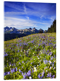 Acrylglasbild  Blumenwiese am Mount Rainier - Chuck Haney