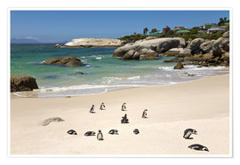 Paul Thompson - Pinguine am Boulders Beach