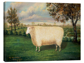 Leinwandbild  A Prize Sheep of the Old Lincoln Breed, 1835 - W. Adamson