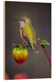 Fred Lord - USA, Colorado. Hummingbird rests on flower bud. Credit as: Fred Lord / Jaynes Gallery / DanitaDelimo