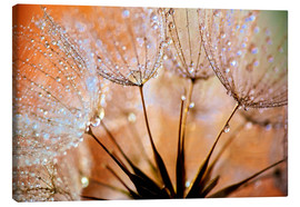 Leinwandbild  Pusteblume orange Light - Julia Delgado