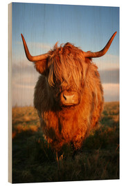 Holzbild  Highlander - Hochland Rind - Highland Cattle - Martina Cross