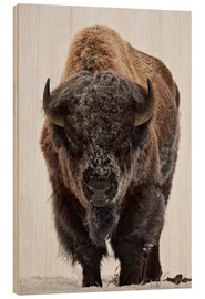 Holzbild  Bison im Winter - James Hager