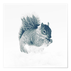 Poster squirrel