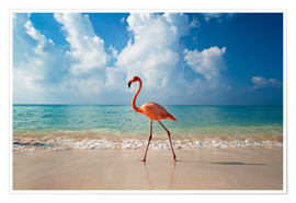 Ian Cuming - Flamingo am Strand