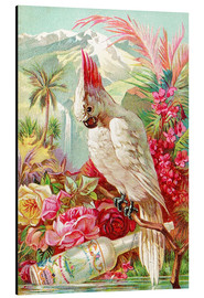 Alubild  Cocktail Cockatoo - Advertising Collection