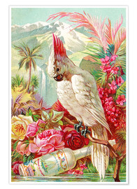 Premium-Poster  Cocktail Cockatoo - Advertising Collection