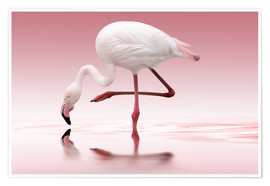 Doris Reindl - Flamingo