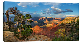 Michael Rucker - Grand Canyon mit knorriger Kiefer
