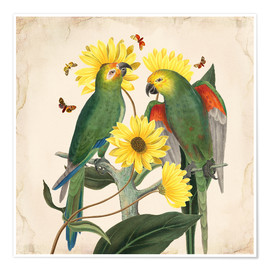 Premium-Poster  Oh My Parrot II - Mandy Reinmuth