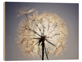 Holzbild  Dandelion is ready to fly