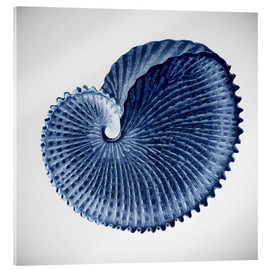 Acrylglasbild  Seashell - Mandy Reinmuth