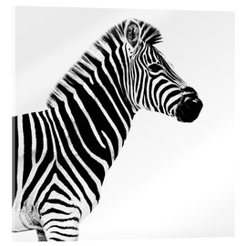 Philippe HUGONNARD - Safari Profil Collection - Zebra White Edition II
