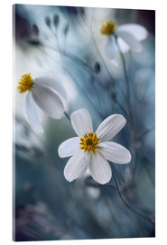 Acrylglasbild  bidens - Mandy Disher