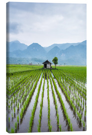 John Alexander - Small hut in the middle of Padi field in Sumatra, Indonesia, Southeast Asia