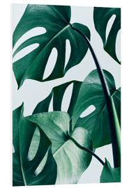 Forex  Monstera - Uma 83 Oranges