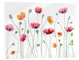 Acrylglas  Papaver Partei - Mandy Disher