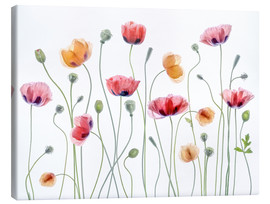 Leinwandbild  Mohn-Party - Mandy Disher