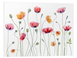 Forex  Papaver Partei - Mandy Disher