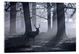 Acrylglasbild  A male red deer stag waits in the early morning mists of Richmond park, London. - Alex Saberi