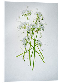 Axel Killian - Allium ursinum, Heilkraut