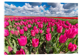 Remco Gielen - Beautiful dutch Field of pink tulips
