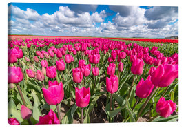 Leinwandbild  Beautiful dutch Field of pink tulips - Remco Gielen