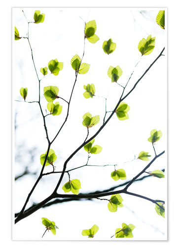 Premium-Poster Signs of Spring